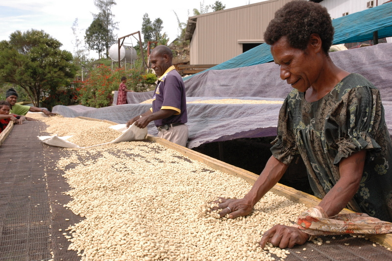 Coffe Drying Beds in PNG